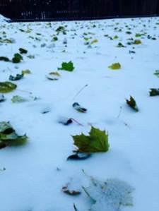 snow michaels back yard
